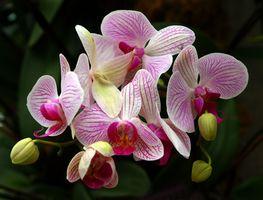 Arrangements floraux de mariage tropical