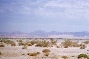 Quels sont les dangers de randonnée dans le désert?