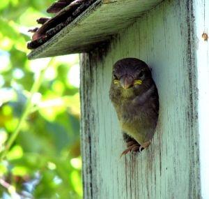 Comment attirer les oiseaux dans les maisons existantes
