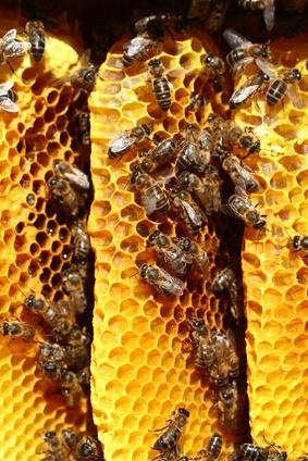 Comment faire pour supprimer Bee Propolis Taches