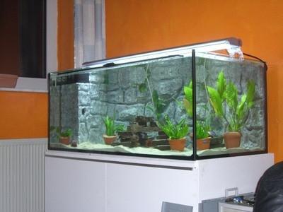 Comment construire un arri re plan aquarium for Construire un aquarium