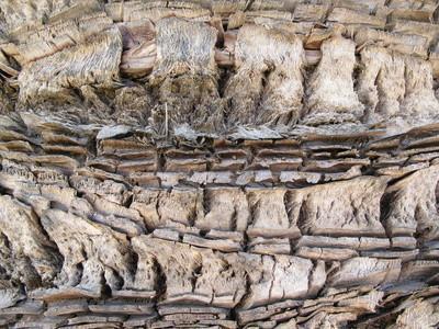 Types de Bugs & insectes qui vivent dans les bois