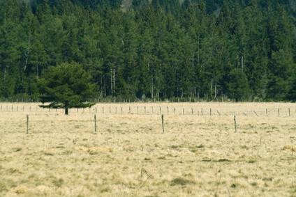 Types de sols des Prairies