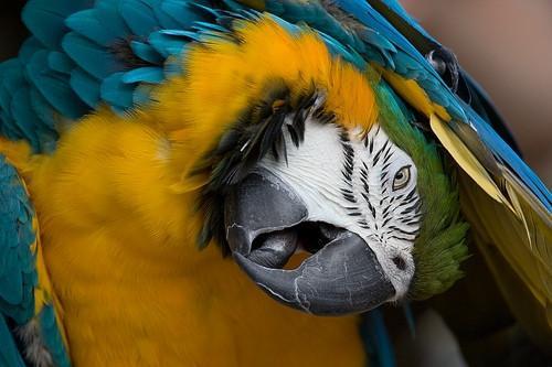 Est-graines pour oiseaux sauvages Safe pour Perroquets?
