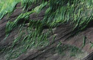 Quelles sont les causes Stringy algues?