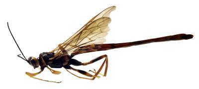 Les insectes qui éclosent dans l'eau