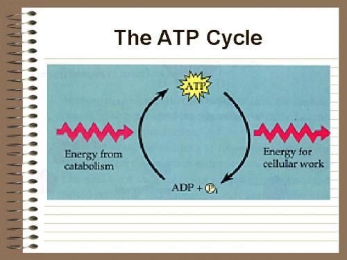 Quelle molécule est utilisé comme combustible pour une cellule?