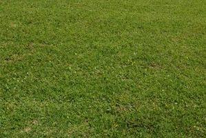 Projets Expo-sciences sur le pH du sol et Herbe Croissance