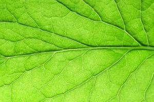 Comment fonctionne l'obscurité affecte la croissance des plantes?