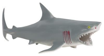 Comment Creusez pour les dents de requin
