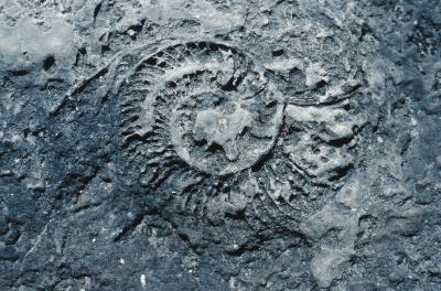 Quels sont les trois types de fossiles?