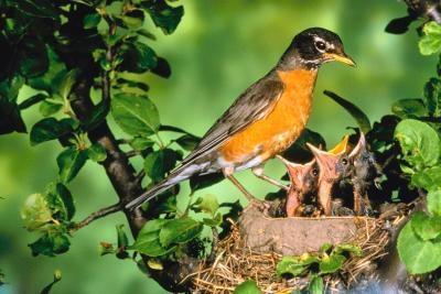 Quel type de fruits que les oiseaux sauvages mangent?