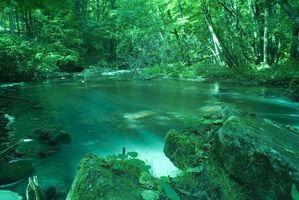 Facteurs Aboitic en Tempéré Rain Forest