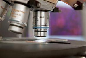 Comment Concentrez un Microscope parfocal