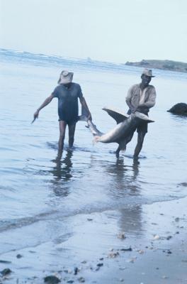 Les effets de la pollution dans les environnements aquatiques