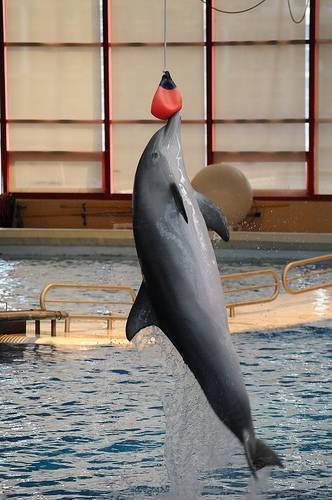 How High Can Dolphins Jump?