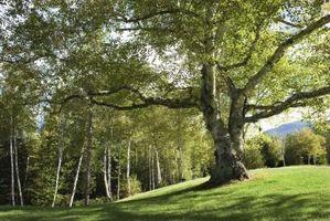 """Où trouver les Sprites de récolte sur """"Harvest Moon: Tree of Tranquility"""""""