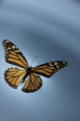 Liste des insectes en Caroline du Sud