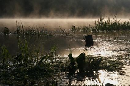 Comment savoir si un bug de l'eau est un mâle ou femelle?