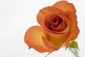 Idées bon marché pour Pew Fleurs