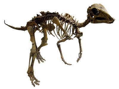 Le Top 10 des musées de dinosaures