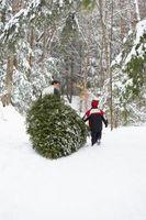 Alternatives à un stand d'arbre de Noël