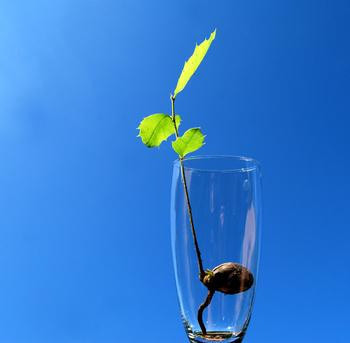 Le processus de germination des semences