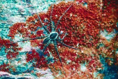 Spiders longues jambes et rapides communs dans l'Utah County