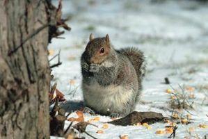 Habitat Écureuils à l'hiver