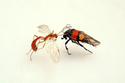 Les parties d'un corps d'insectes