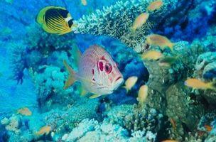 La progression des récifs coralliens étapes