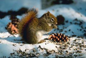 Activités préscolaires pour les Écureuils