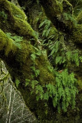 Quelles sont certaines plantes dans la forêt tropicale tempérée?
