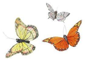 Papillons pour les mariages
