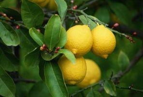 Lemon Tree Crafts