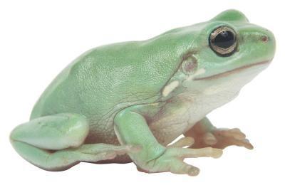 Comment faire une figure Frog