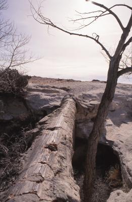 Types de Rock Fossiles