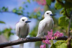 Quels sont les facteurs biotiques sur les oiseaux?