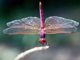 Flytech Dragonfly Conseils