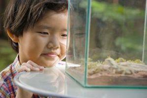 Utilisations pour Aquariums Sans poisson
