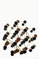 Quels sont les 10 niveaux d'organisation dans la hiérarchie de la vie?