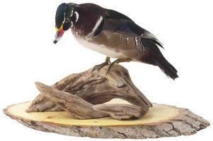 Comment puis-je utiliser Borax pour préserver un oiseau?