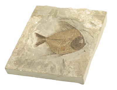 Comment faire un moule et fonte d'un fossile
