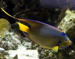 Comment faire votre propre jeu de poissons en ligne