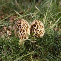 Champignons trouvés dans le New Jersey