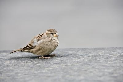 Comment reconnaître un oiseau par Sound