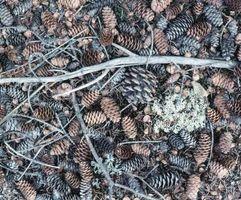 Décorations de Noël Fait avec Pinecones