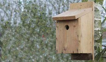 Comment faire Boîtes oiseaux