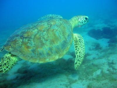 Les plantes qui sont dans le Biome des récifs coralliens