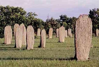 Qu'est-ce que Termite Mounds Look Like?